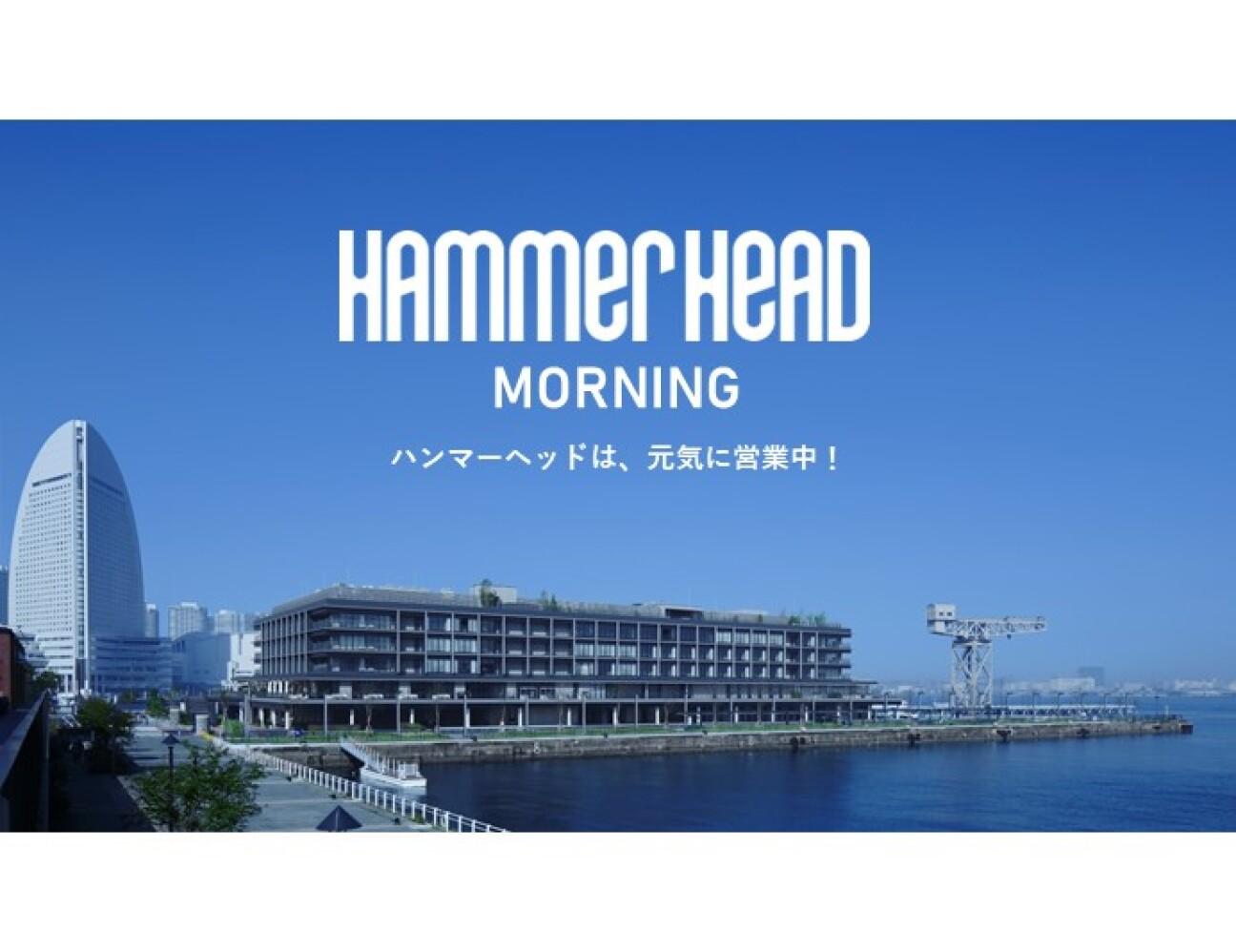HAMMERHEAD MORNING